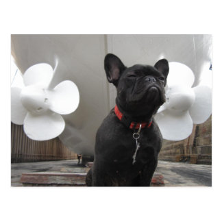 Dogo francés negro postal