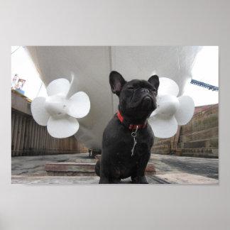 Dogo francés negro póster