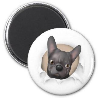 Dogo francés (negro) que revienta hacia fuera imán redondo 5 cm