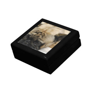 Dogo francés perezoso caja de regalo