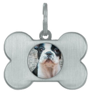Dogo francés placa de mascota