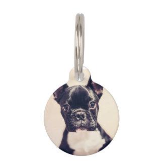 Dogo francés placas de mascota