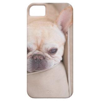 Dogo francés que descansa sobre el sofá iPhone 5 cárcasas