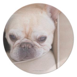 Dogo francés que descansa sobre el sofá plato para fiesta