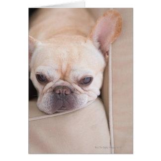 Dogo francés que descansa sobre el sofá tarjeta de felicitación