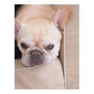 Dogo francés que descansa sobre el sofá tarjeta postal