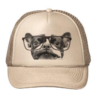 Dogo francés reputable con los vidrios gorras de camionero