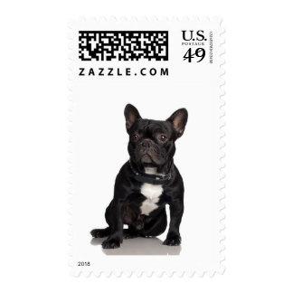 Dogo francés sellos