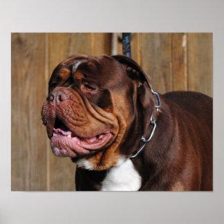 dogo hermoso del renacimiento del perro de la raza póster