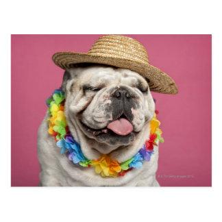 Dogo inglés (18 meses) que lleva una paja postales
