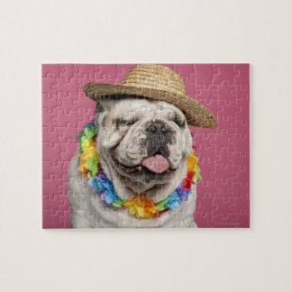 Dogo inglés (18 meses) que lleva una paja puzzles con fotos