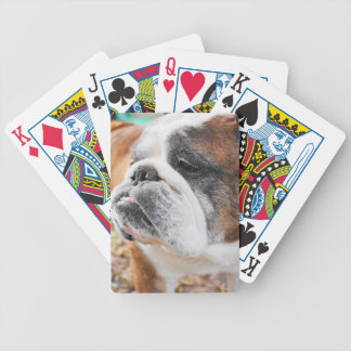 Dogo inglés barajas de cartas