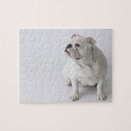 Dogo inglés blanco puzzle