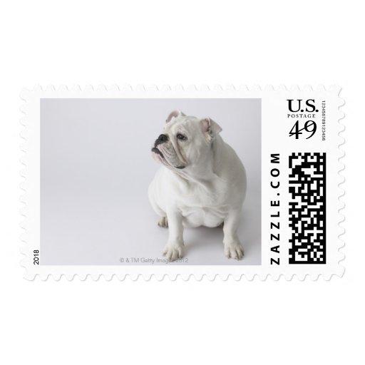 Dogo inglés blanco timbre postal
