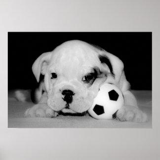 Dogo inglés del perrito del fútbol poster