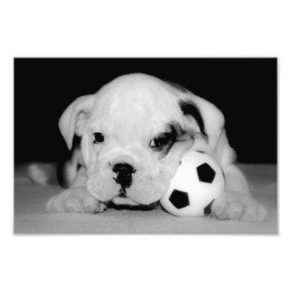 """Dogo inglés del perrito del fútbol"" Impresion Fotografica"