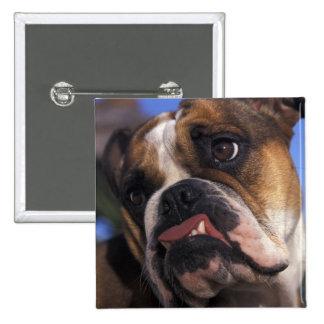 Dogo inglés pin cuadrado