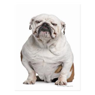 Dogo inglés, sentándose postal