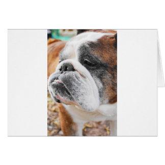 Dogo inglés tarjeta de felicitación