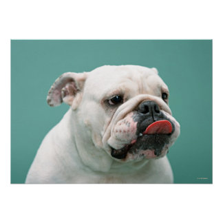Dogo Impresiones