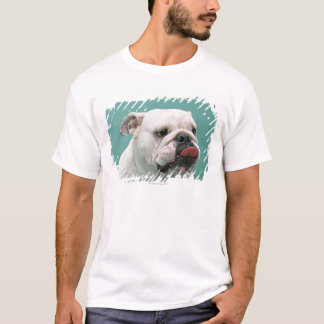 Dogo Playera