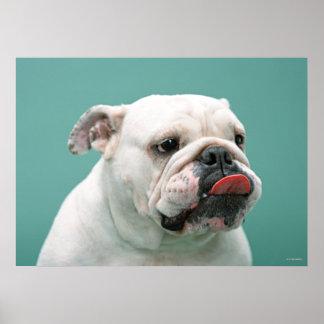 Dogo Póster
