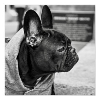 Dogo urbano perfect poster