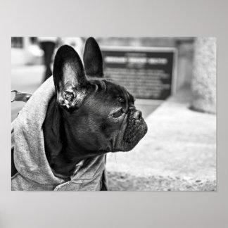 Dogo urbano póster