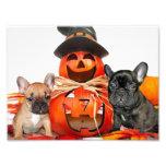 Dogos franceses de Halloween Impresion Fotografica