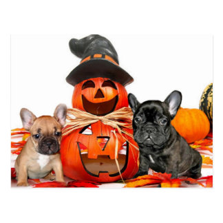 Dogos franceses de Halloween Tarjeta Postal