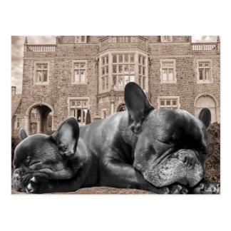 Dogos franceses el dormir tarjeta postal
