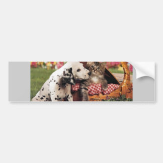 Dogs and cats do get along car bumper sticker