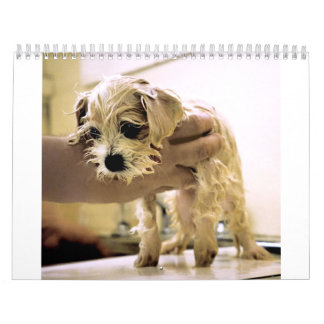 Dogs and Cats  : Photographs and Drawings Calendar