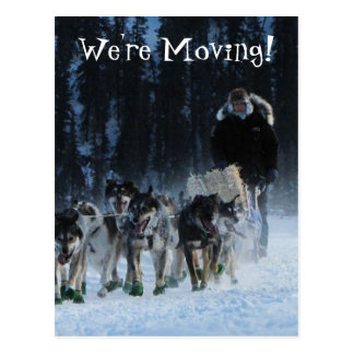 Dogs and Musher; Change of Address Postcard