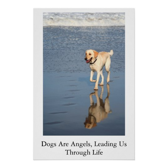 Dogs Are Angels Poster