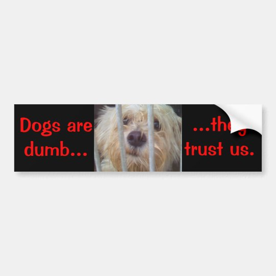 Dogs Are Dumb Bumper Sticker