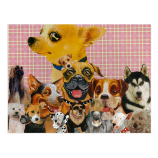 Dogs are Fun Postcard