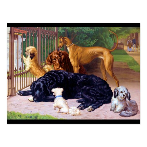 Dogs at the Gate Postcard