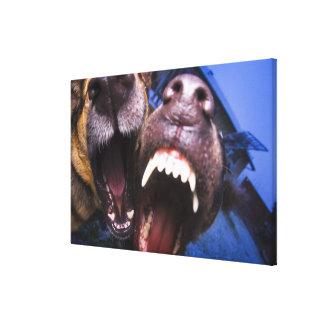 Dogs barking canvas print
