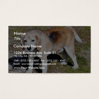 Dogs Beagles Business Card