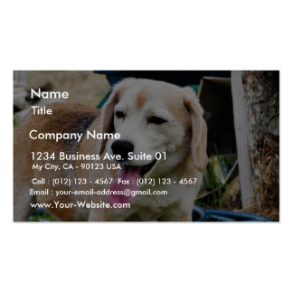 Dogs Beagles Tongues Fur Panting Business Cards