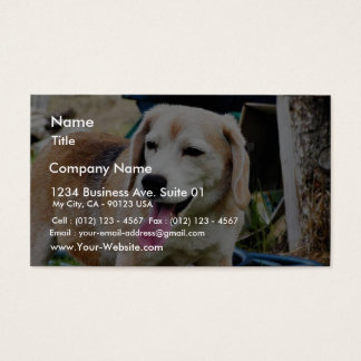 Dogs Beagles Tongues Fur Panting Business Card