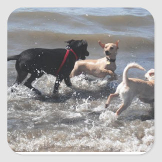 DOGS enjoying the beach! Square Sticker
