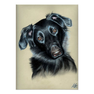 Dogs Eyes I Poster