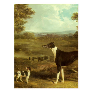 Dogs, Greyhound and Spaniel, Doctor Fop by Herring Postcard