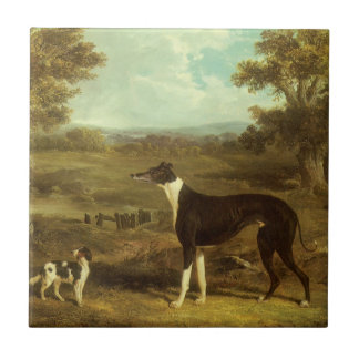 Dogs, Greyhound and Spaniel; Doctor Fop by Herring Small Square Tile