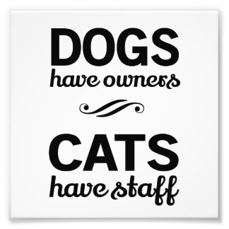 Dogs Have Owners, Cats Have Staff Photo Print