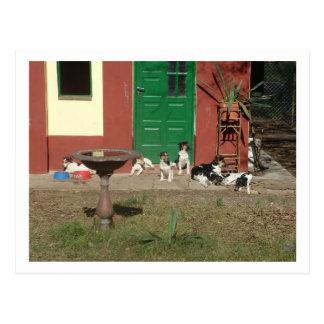 dog's house postcard