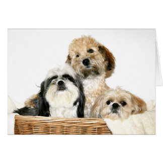 Dogs in laundry basket card