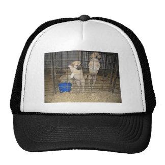 Dogs in  pen trucker hat